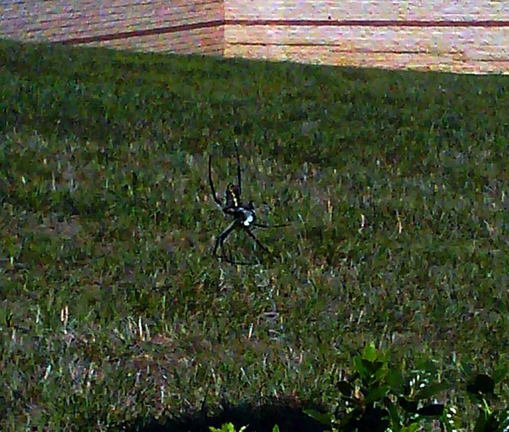 The Itsy Bitsy Spider Isn't So Itsy Bitsy