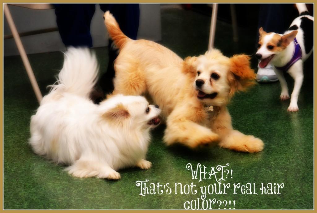 gossip dogs