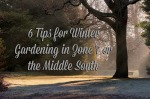 6 Tips for Winter Gardening in Charlotte