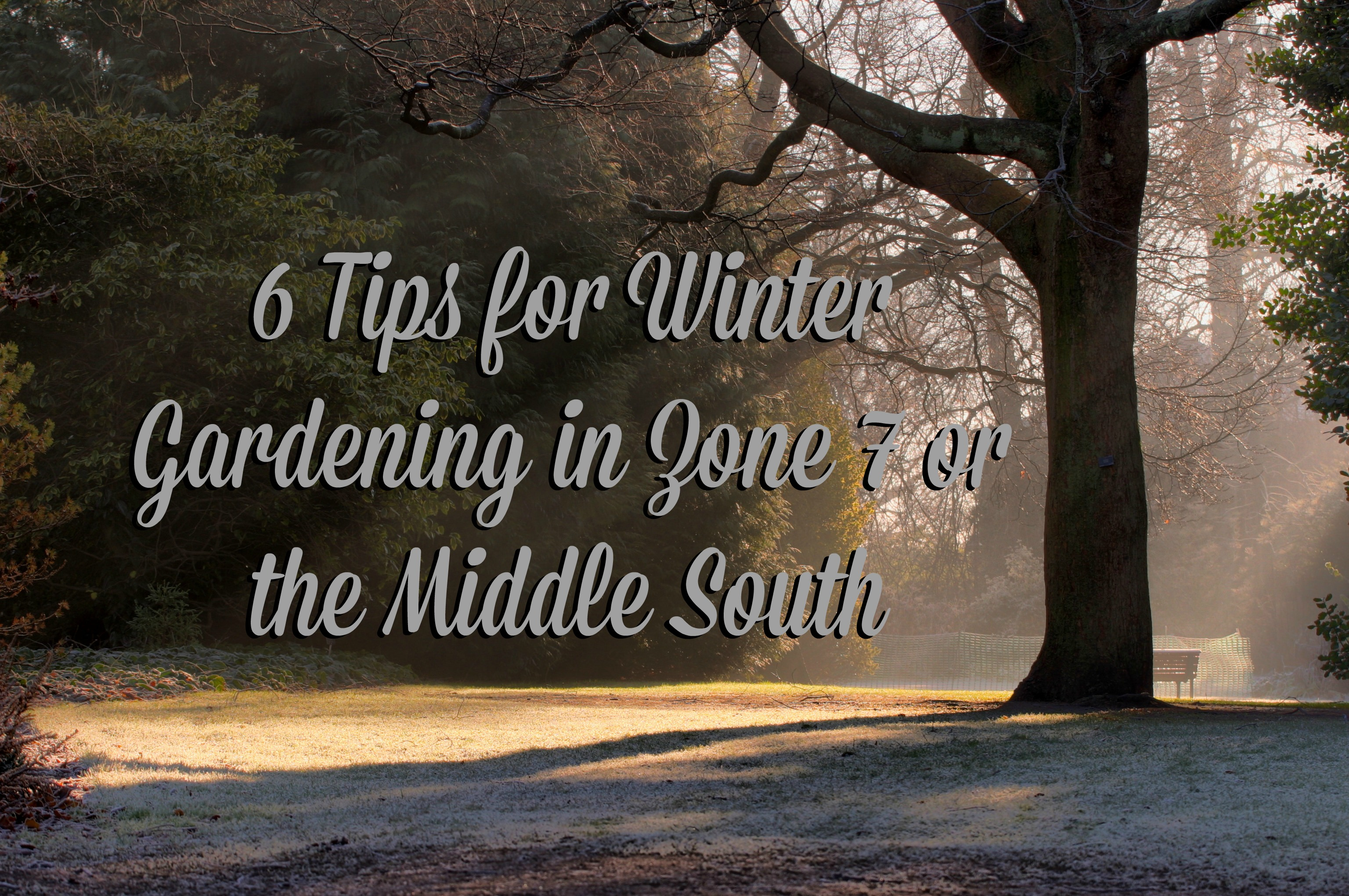 6 tips for winter gardening in charlotte nc blogger network