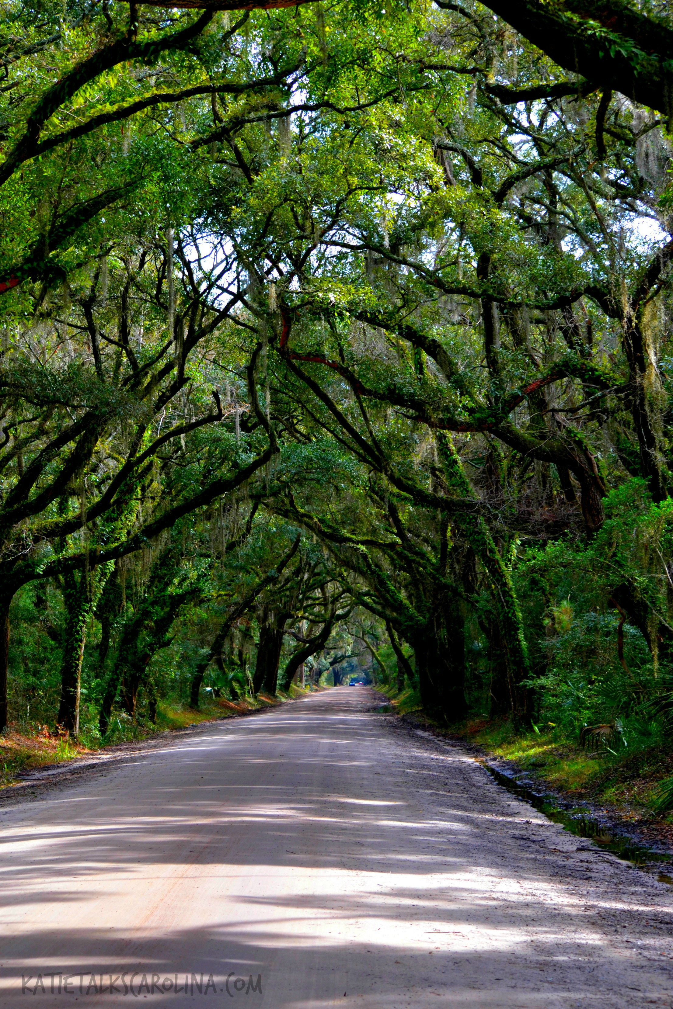 Botany Bay on Edisto Island in South Carolina