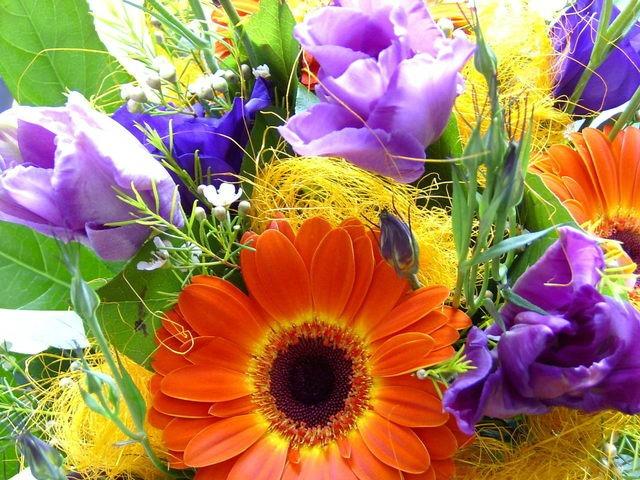 101 in 1001 Flowers