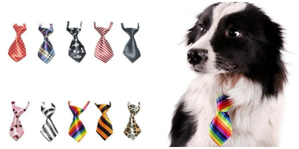 10 best dog accessories
