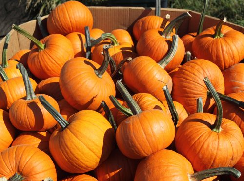 pumpkin patches close to charlotte