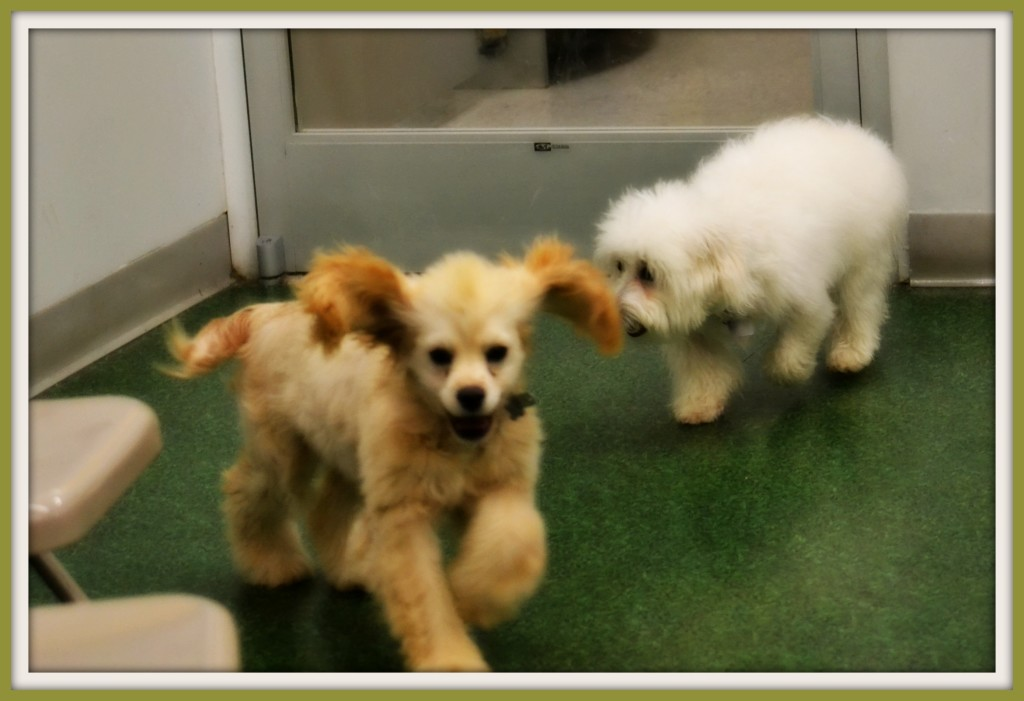 Puppy Play Time at Petco