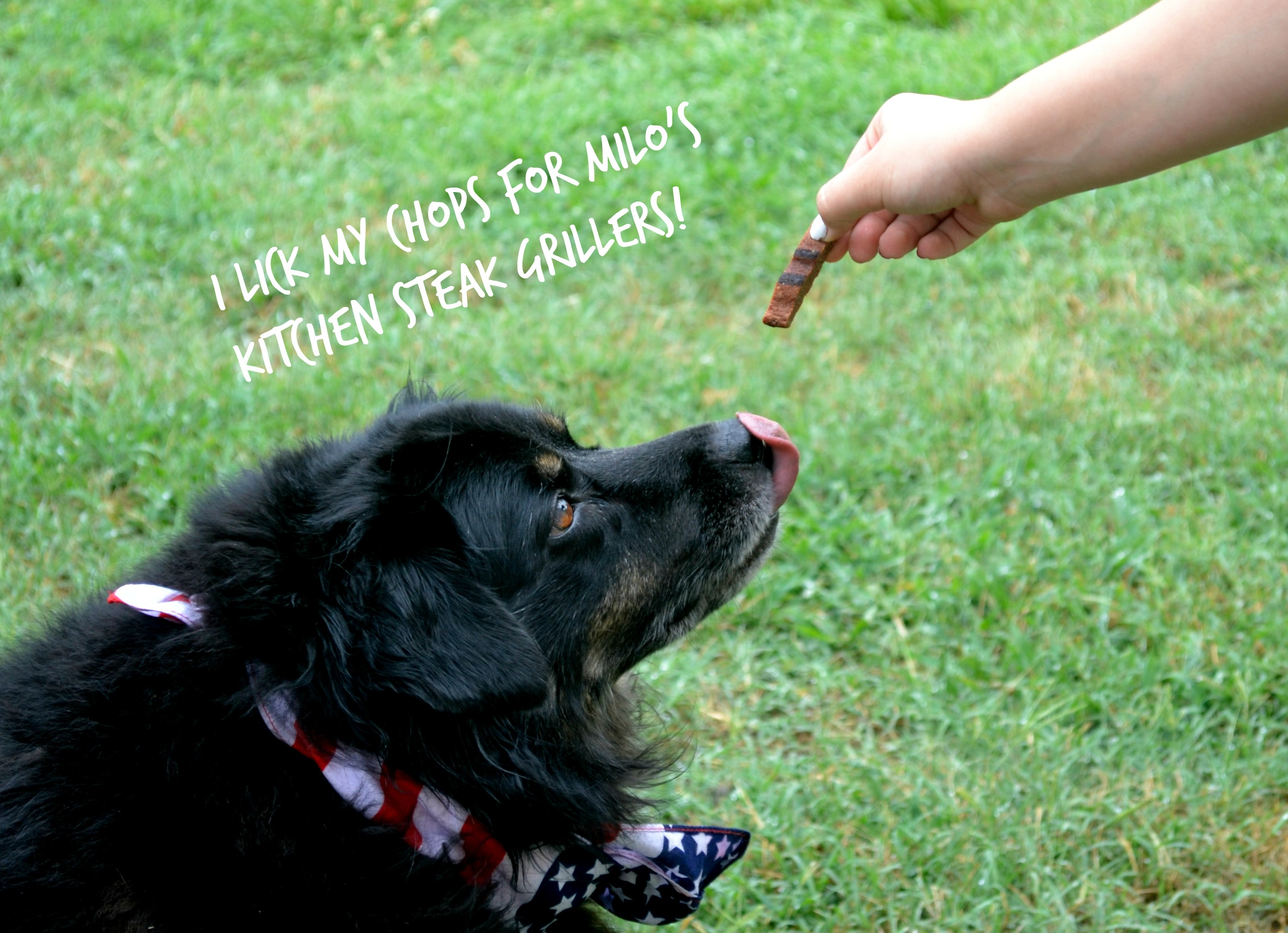 Milo's Kitchen Treats Review & Giveaway – Don't Miss the Treat Truck!