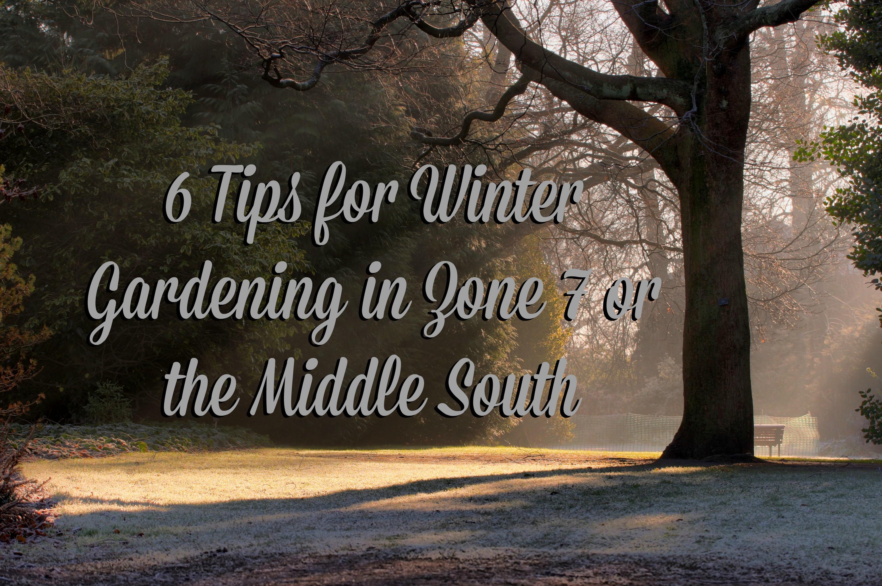6 Tips for Winter Gardening in Charlotte