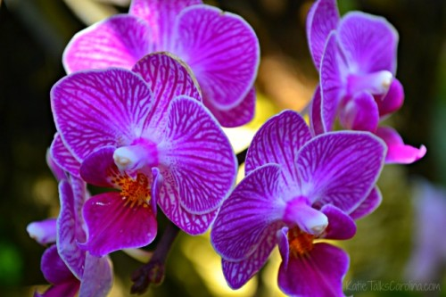Visit the UNCC Botanical Gardens