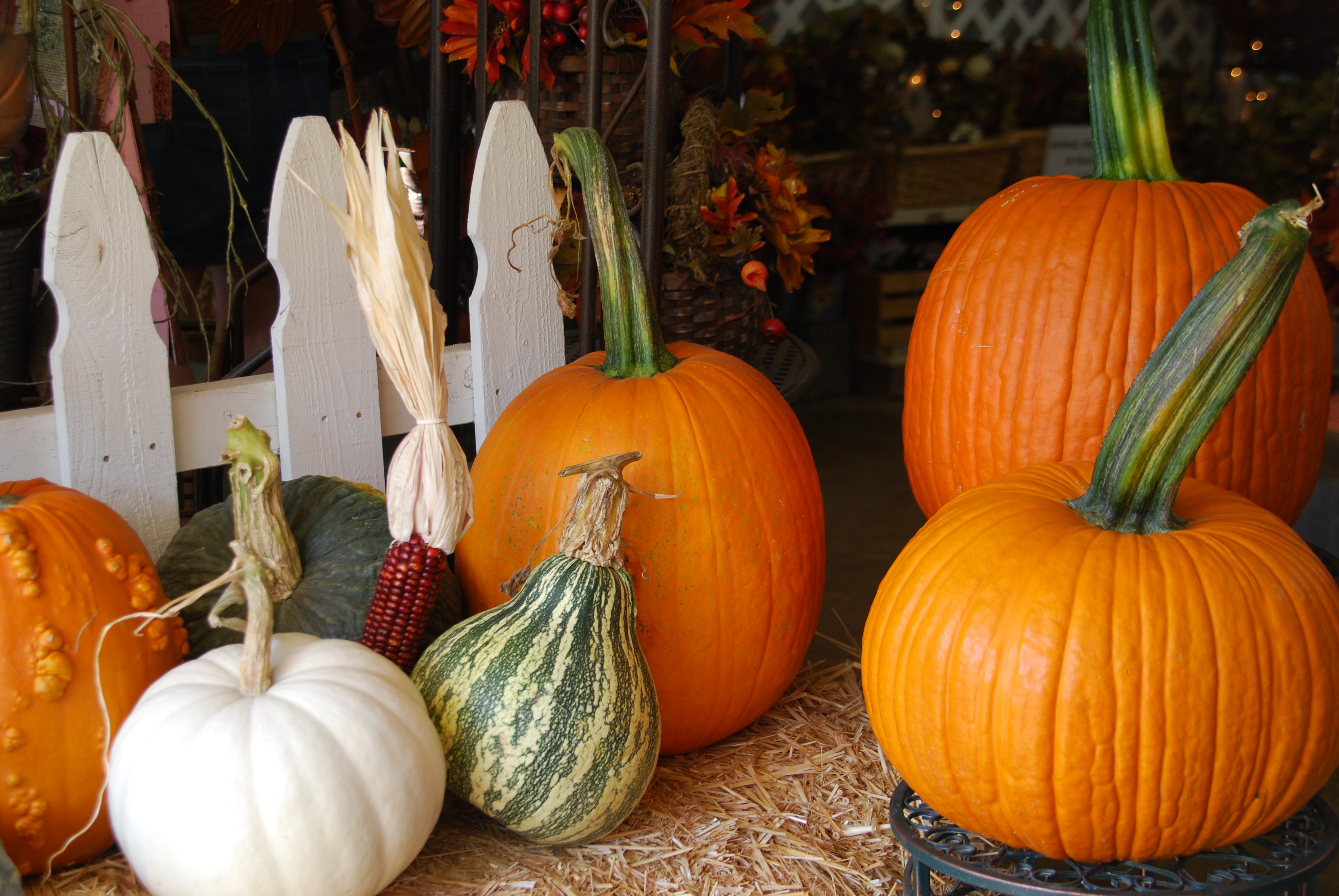 Facts About Pumpkins